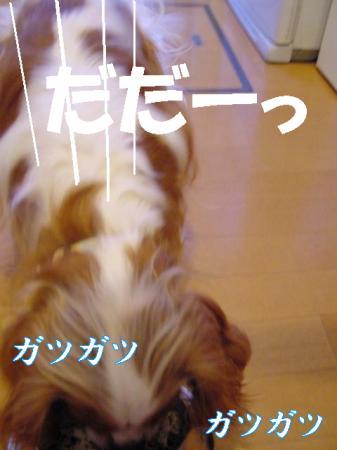 20070731163007.jpg