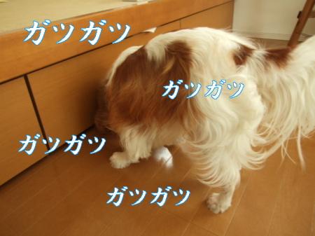 20070830163532.jpg