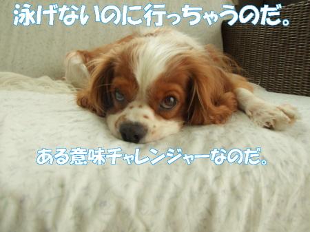 20070910112828.jpg
