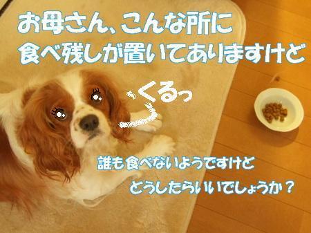 20071004113526.jpg