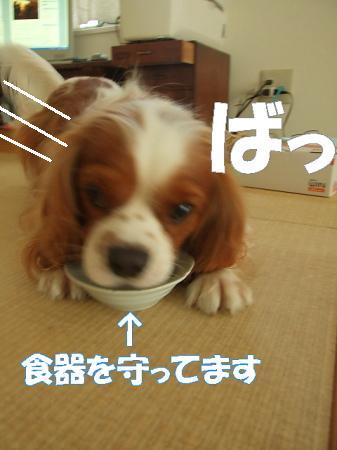 20071011164106.jpg