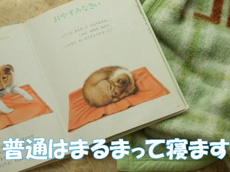 2007aigo (38)