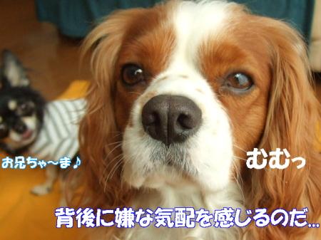 20071119223551.jpg