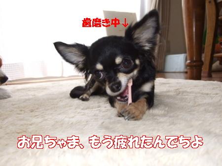 2007_0007.jpg