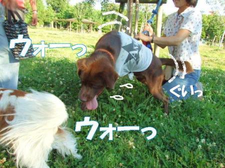 chokoko.jpg