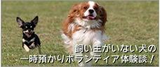 img_kainushi.jpg