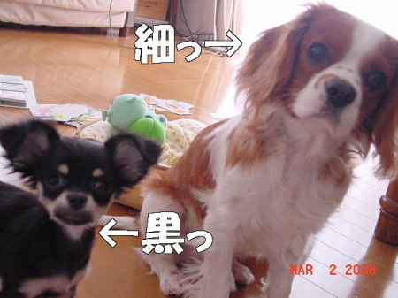 kuro4.jpg