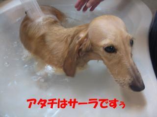 サーラ入浴中