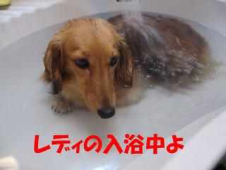 キャロル入浴中