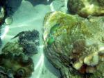Apo島のさんご礁