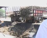 サトウキビ満載のトラック