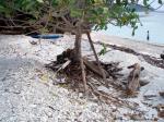 被害を受けた木