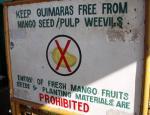 マンゴは持ち込み禁止