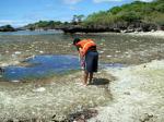 漂着した重油が取り除かれた砂浜