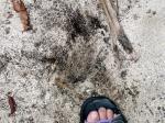 砂浜に残った重油 その2