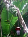 未知の植物?