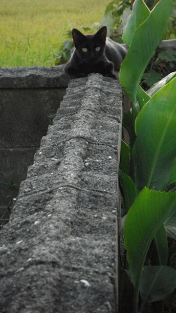 8-7-2_20110807091318.jpg