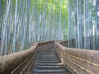念仏寺の竹林