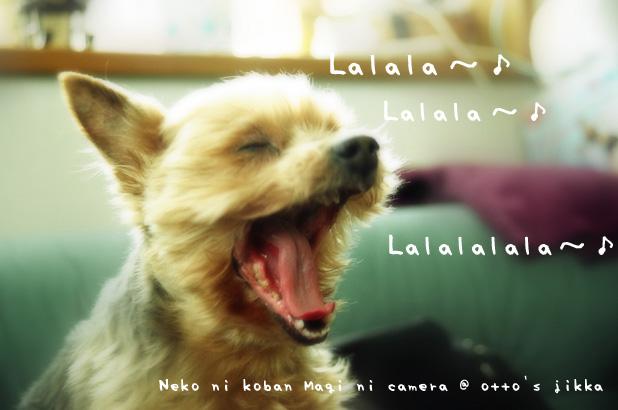 歌ってるよ、おい!