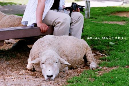 おやすみ羊さん
