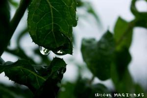 雨の中のお散歩