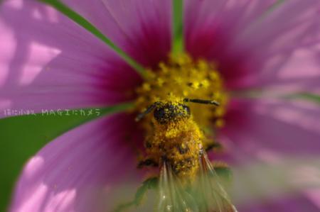 食いしん坊蜂