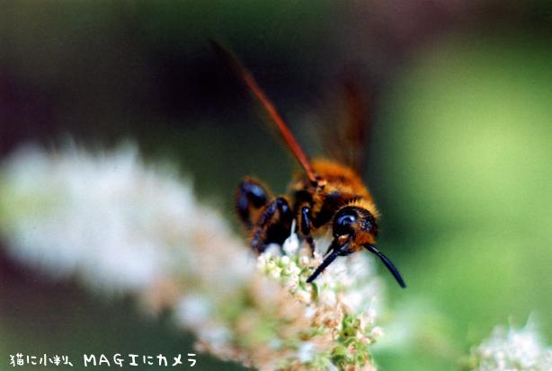 廻る蜂さん