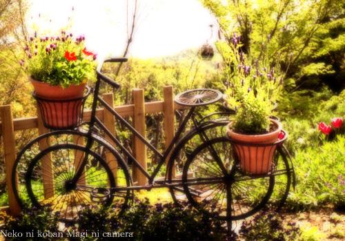 自転車とラベンダー