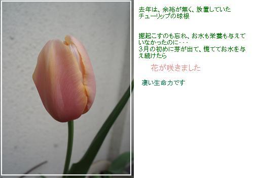 110430P5012700.jpg