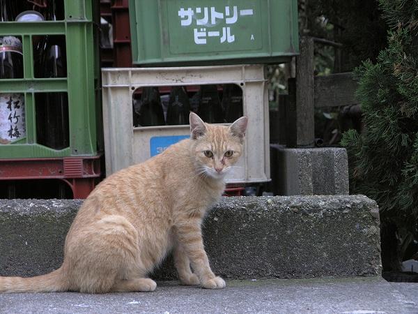 20070917_057