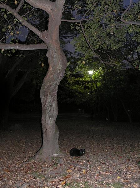 20071108_046