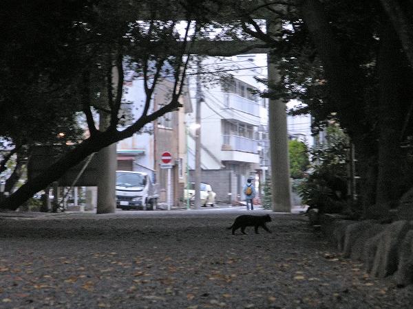 20071128_023