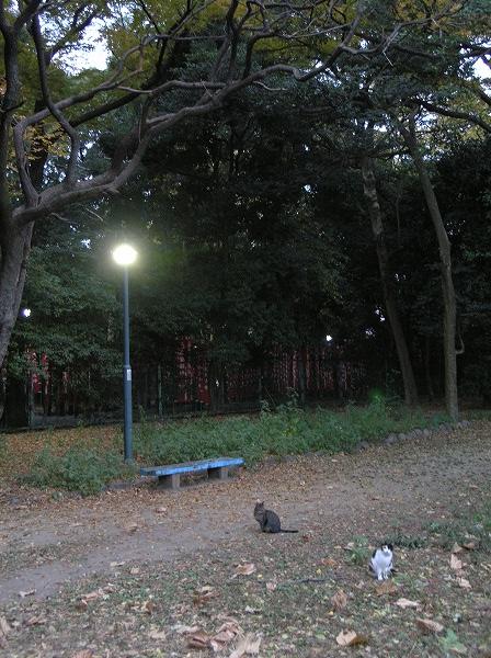 20071128_030