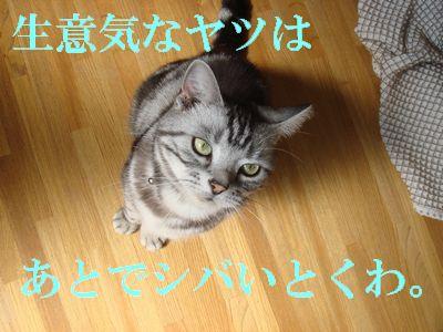 20071113023939.jpg
