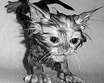 しょぼくれ濡れネコ画像集