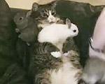 仔ウサギを可愛がるネコ