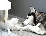 犬と子猫、ホントは仲良くしたいのに…