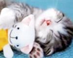 ペット達の可愛い寝顔コンピレーション