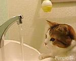 排水溝が気になる仔猫