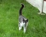 ネコが迫ってくる!
