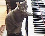 ピアノで遊ぶネコ