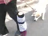 飼主に噛み付きながら散歩する犬