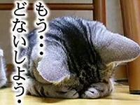 猫可愛いぃぃいいいい