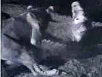 野生の動物が生きるための死闘特集