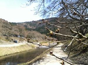 季節・鯏川(ハクナマタタ)