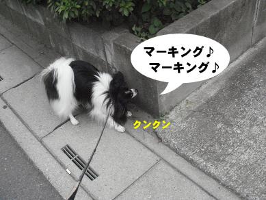 20070822001050.jpg
