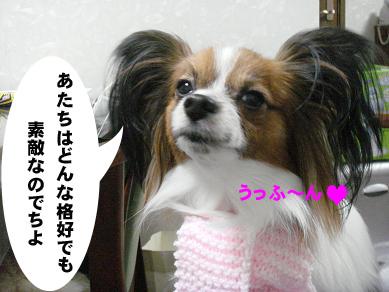 20071216011550.jpg