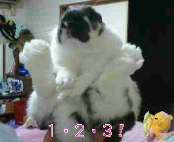 20060323211149.jpg