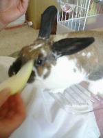 リンゴ食べる!