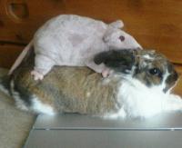 ネズミちゃんラブ③